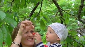 拿着她的婴儿小儿子的妈妈采摘从树的莓果 常平架行动 股票录像