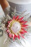 拿着她美丽的普罗梯亚木花花束的新娘 库存图片