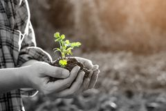 拿着婴孩植物的农夫 免版税库存图片