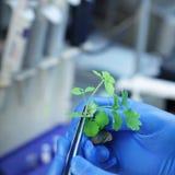 拿着害病的植物的科学家 图库摄影