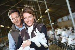 拿着小山羊的交配动物者夫妇  免版税库存图片