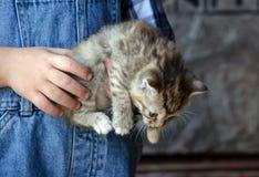 拿着小猫的年轻手 免版税库存照片