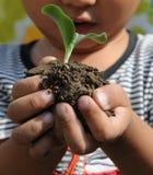 拿着小的幼木的男孩小 免版税图库摄影