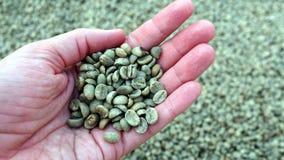 拿着干燥咖啡豆的手 免版税库存图片