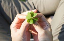 拿着幸运的三叶草叶子的妇女的手 库存图片
