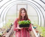 拿着幼木的可爱的少妇自温室 库存照片