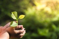 拿着幼木的年轻人的手被种植在土壤 并且Th 图库摄影