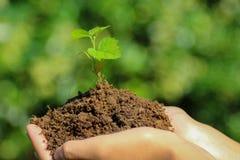 拿着幼木的新的生活概念手 库存图片
