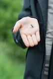 拿着微小的黑蝴蝶 免版税图库摄影