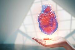 拿着心脏全息图的手 库存照片