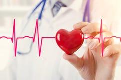 拿着心脏3D模型的心脏科医师 与心电图的概念 图库摄影