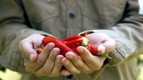 拿着成熟菜的农夫在有机庭院里 股票录像