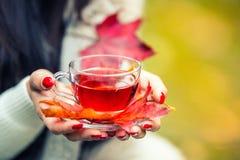 拿着手中热的红色茶的年轻可爱的妇女 放松在秋天自然用热的茶 图库摄影