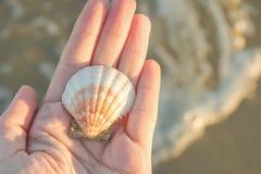 拿着手中美好的平的圆的海壳的少妇 蓝色绿松石水背景金黄阳光 免版税库存图片