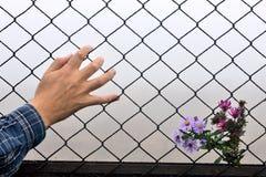 拿着手和背景的铁丝网 免版税图库摄影