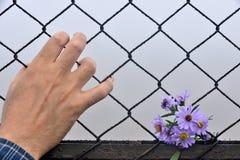 拿着手和背景的铁丝网 免版税库存照片