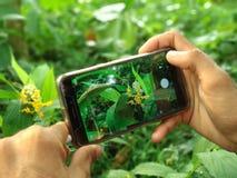 拿着手机点击照片花的手在庭院里 库存照片