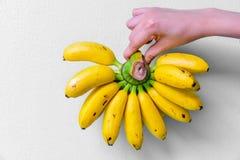 拿着捆绑成熟香蕉的手 免版税库存照片