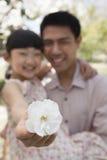 拿着接近照相机的女儿一朵樱花与她的父亲在公园春天 库存图片