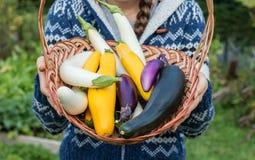 拿着新近地被采摘的有机菜的柳条筐少妇 免版税图库摄影