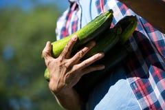 拿着新鲜的夏南瓜的老人在菜园里 库存图片