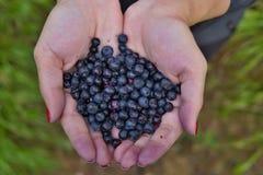 拿着新鲜的蓝莓的堆在绿色背景上的女性手 免版税库存图片