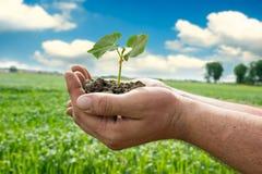 拿着新鲜的年幼植物的手 免版税图库摄影
