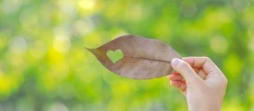 拿着有心形的妇女手干叶子在绿色自然本底在庭院里室外 社会责任感爱和 图库摄影