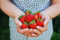 拿着有机成熟草莓的农夫手 库存照片