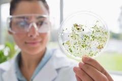 拿着有植物测试的化学家一块单块玻璃  免版税库存图片