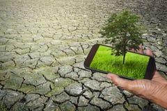 拿着有草的在屏幕上的一个人的手手机和树 免版税库存照片
