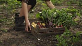 拿着木箱新鲜的有机蔬菜的农夫沿在eco农场的庭院床充分去日落光的 股票录像
