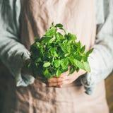 拿着束新鲜的绿色薄菏,方形的庄稼的女性农夫 图库摄影