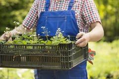 拿着条板箱盆的植物的人的中央部位在庭院 库存图片
