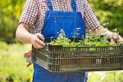 拿着条板箱盆的植物的人的中央部位在庭院 免版税库存图片