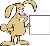 拿着标志的动画片兔子 库存图片
