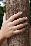 拿着树干的男性手 图库摄影