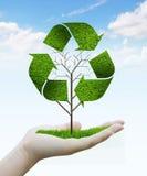 树作为回收标志 免版税图库摄影