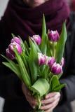 拿着桃红色郁金香的人 礼品券模板、海报或者贺卡-供以人员拿着桃红色郁金香花束妇女的 免版税库存照片