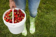 拿着桶新鲜的草莓的妇女 库存图片