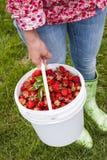 拿着桶新鲜的草莓的妇女 免版税库存照片