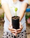 拿着植物的妇女手 免版税图库摄影