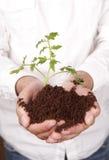 拿着植物的手发芽从土壤 图库摄影