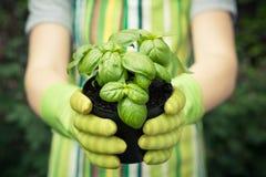 拿着植物的手 图库摄影
