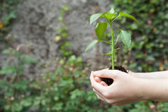拿着植物的手 免版税库存照片