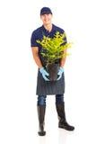 拿着植物的花匠 库存照片