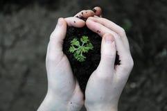 拿着植物种子的手 图库摄影
