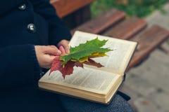 拿着槭树叶子和一本书的外套的女孩在澳大利亚的公园 库存照片