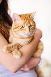 拿着橙色Tomcat的女孩 免版税库存图片