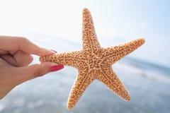 拿着海星的妇女在海滩 库存图片